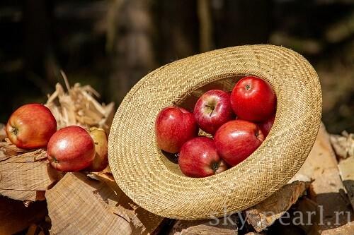 яяблоки в соломенной шляпе