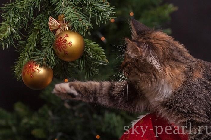 новогодняя живая елка
