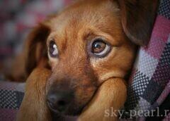 Состояния питомца, требующие неотложной помощи ветеринара